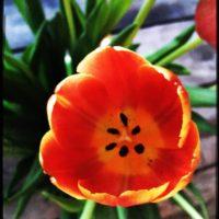 Was steht in mir zur Blüte bereit? -ein meditatives Rollenspiel